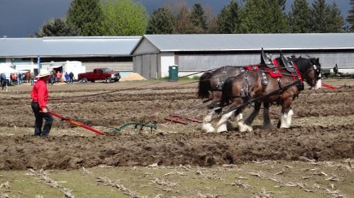 plow match2015 005