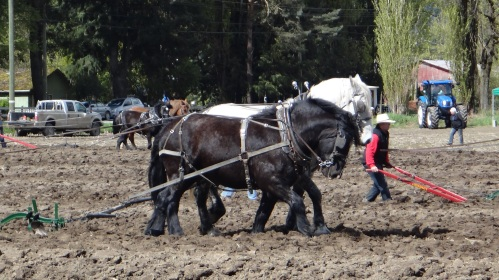 plow match2015 015