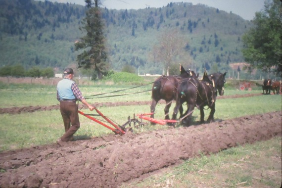 Plowing match held at the Chilliwack Antique powerland{Atchelitz Threshermens Association]