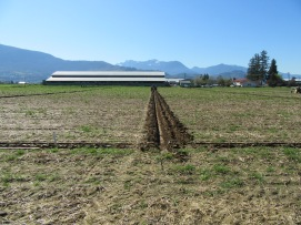 chilliwack plowing match 2016 018