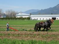 chilliwack plowing match 2016 166