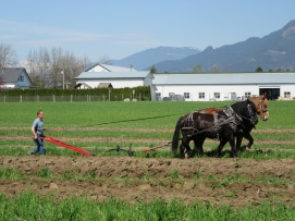 chilliwack plowing match 2016 166
