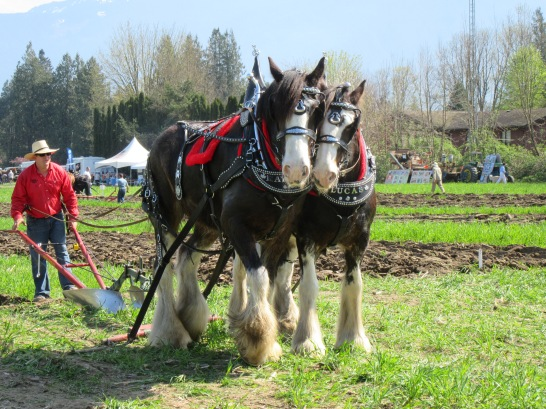 chilliwack plowing match 2016 182