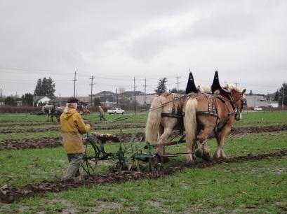 chilliwack plowing match 2017 026