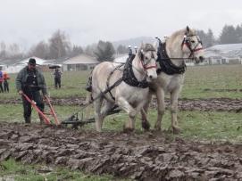 chilliwack plowing match 2017 033