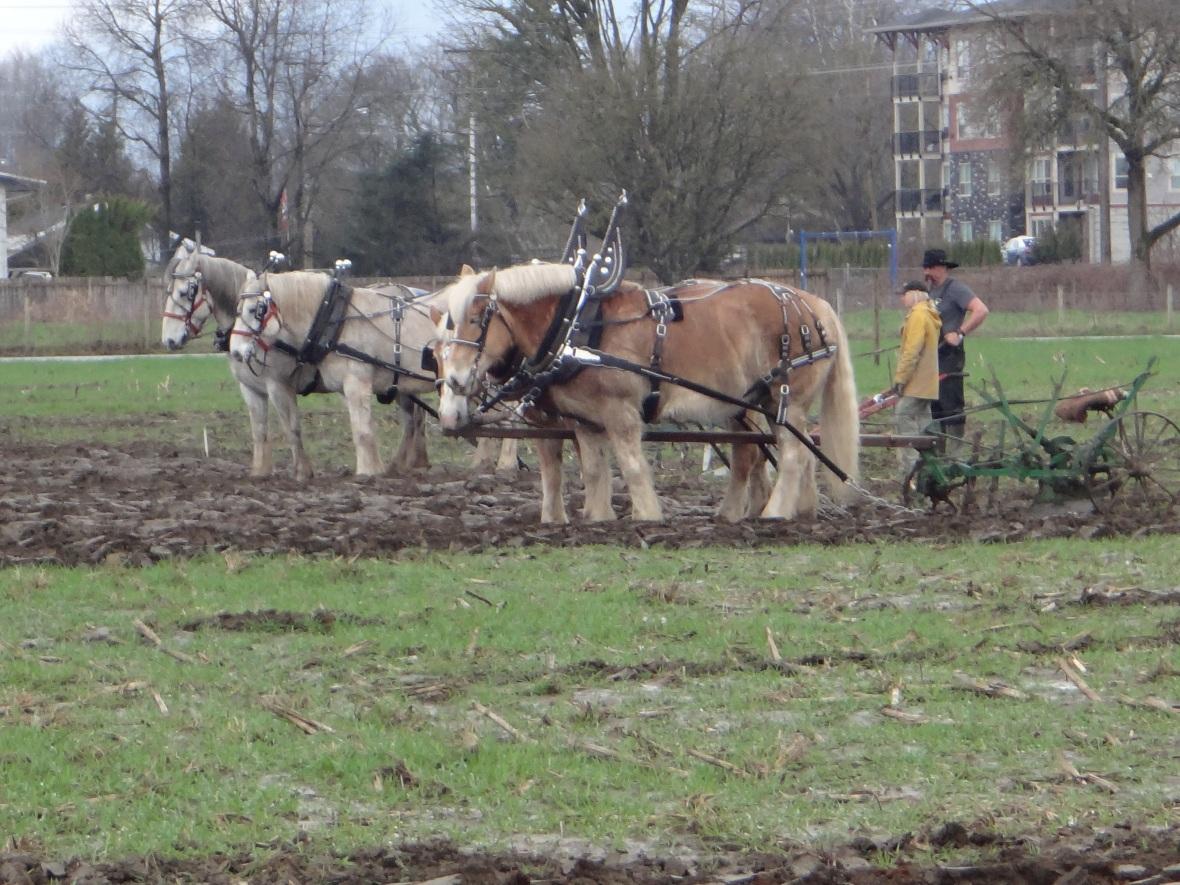 chilliwack plowing match 2017 041