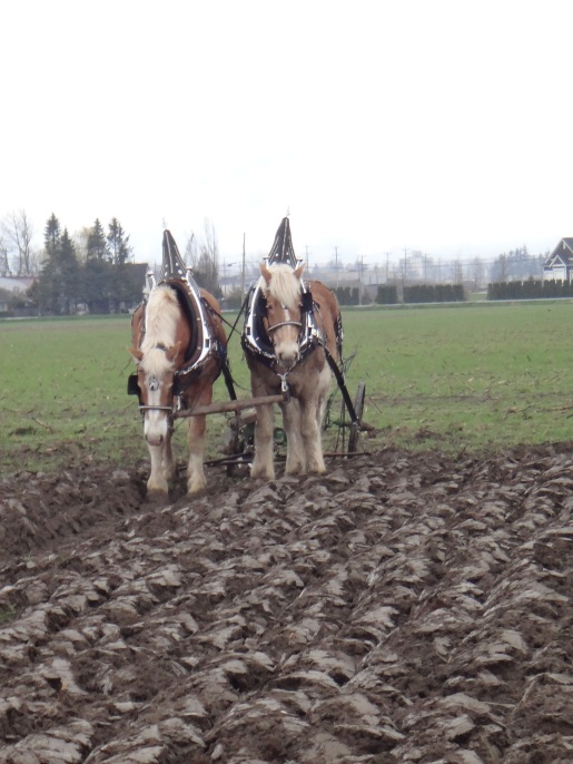 chilliwack plowing match 2017 042