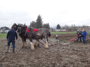 chilliwack plowing match 2017 046