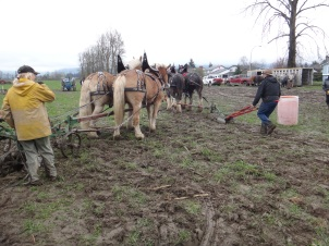 chilliwack plowing match 2017 055