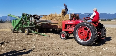 chilliwack plowing match 110