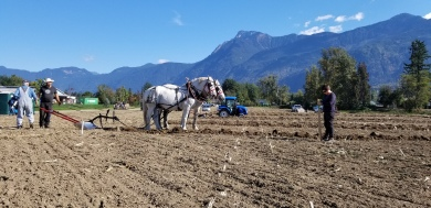 chilliwack plowing match 133