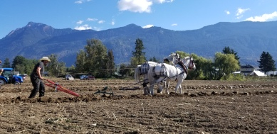 chilliwack plowing match 138